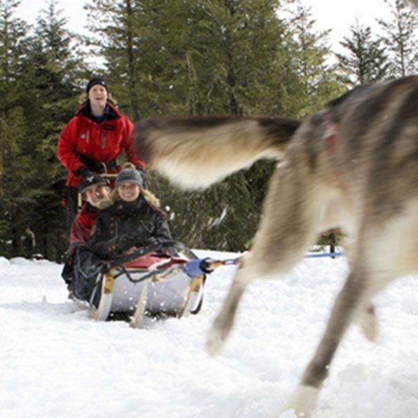 Dogslegging in Whistler-Trineos con perros